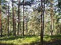 Лес - mikroskops - Panoramio.jpg
