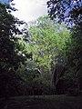 Міський сад 04.JPG