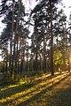Пермь. Черняевский лес, участок за ДКЖ 1.jpg