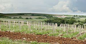Russian wine - Lefkadia vineyards