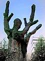 Человек - дерево - panoramio.jpg