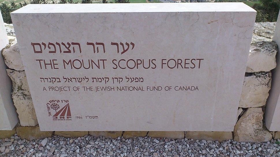 יער הר הצופים - ירושלים