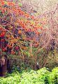 الشجرة العجيبة.jpg