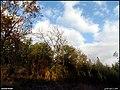 طبیعت پاییزی از باغهای مراغه - panoramio.jpg