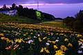 オーンズ春香山ゆり園(Onze Harukayama lily garden) - panoramio (9).jpg