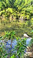 大南山一号营地越野穿越20150822 - panoramio (3).jpg
