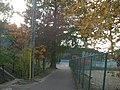 富谷中学校 想い出の樹 Trees - panoramio.jpg