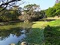 水域生態區 Water Plants Area - panoramio (1).jpg