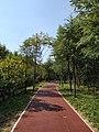紫金山绿道03.jpg