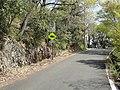 金華山ドライブウェイ - panoramio (1).jpg