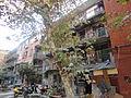 青山的街坊.JPG