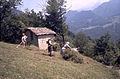 047 Fienagione - donne raccolgono l'erba.jpg