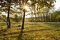 07 LSG 7338 010 Heidewald Abendsonne auf der Heide.jpg