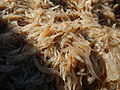 09877jfFields Wawa Shrimps Fish Beaches Orion Bataanfvf 17.JPG