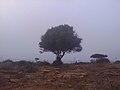 10CESAEREE today TIPAZA .The ancient Roman city in Algeria.jpg