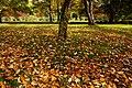 131103 Hokkaido University Botanical Gardens Sapporo Hokkaido Japan17bs.jpg