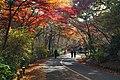 171125 Futatabi Park Kobe Japan20o.JPG