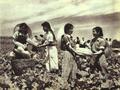 1952-08 北京农业大学 学员.png