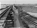 1955 East Punjab Flood 49572.jpg