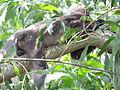 1 Monkey 13.JPG
