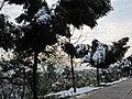 2010年12月15日夜里的那场雪 - panoramio (16).jpg