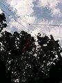 2010년 9월 경기도 남양주시 중앙119구조단 제16기 소방간부후보생 구조 훈련 사진 703 최광모 iPhone 3GS.jpg