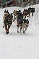 2012 Iditarod (6950517225).jpg