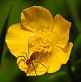 2013-06-09 16-33-08-spider.JPG