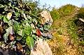 20130314湖州弁山云峰北侧山脊一角 - panoramio.jpg