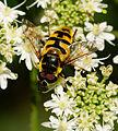 2014-08-10 11-15-55 insecte.jpg