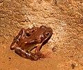 2014-08-13 11-23-51 grenouille.jpg