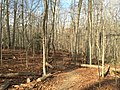 2016-02-08 14 08 11 View north along the Gerry Connolly Cross County Trail between Vale Road and Lawyers Road in Oakton, Fairfax County, Virginia.jpg