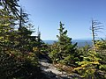 2017-09-11 10 22 46 View east along the Maple Ridge Trail at about 2,840 feet above sea level on the western slopes of Mount Mansfield within Mount Mansfield State Forest in Underhill, Chittenden County, Vermont.jpg