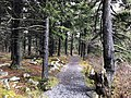 2019-10-27 12 05 38 View northeast along the Whispering Spruce Trail within a Red Spruce grove just south of Spruce Knob in Pendleton County, West Virginia.jpg