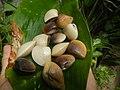 4022Common houseflies cats ants plants foods of Bulacan 15.jpg
