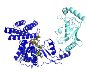 Ubiquitin ligase