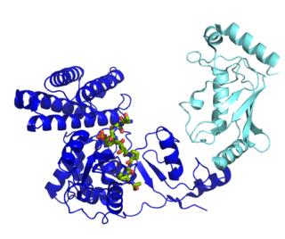 Ubiquitin ligase protein