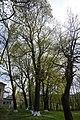 68-247-5014 Базалія, старі дерева, територія лікарні.jpg