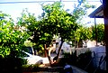 A@a And. collection (my garden) - panoramio.jpg