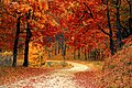 A beautiful road with leaves falling.jpg