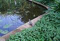 A bird at lotus lake at Law Garden, Ahmedabad.JPG