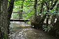 A bridge over the River Caen in Blackwell Wood viewed from up stream - geograph.org.uk - 2064061.jpg