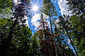 A few trees and the sun (6009964513).jpg