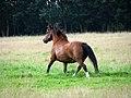 A fine pony - geograph.org.uk - 935115.jpg