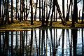 A pond (1920067071).jpg