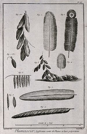 Robert Bénard - A variety of plumes. Engraving by R. Bénard after Degerantin Wellcome
