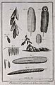 A variety of plumes. Engraving by R. Bénard after Degerantin Wellcome V0019620EL.jpg