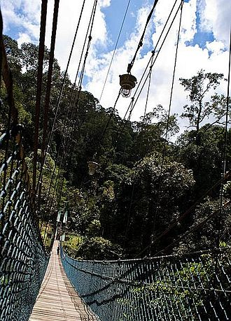 Ulu Temburong National Park - A suspension bridge in Ulu Temburong National Park