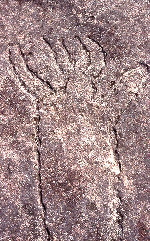 Terrey Hills, New South Wales - Image: Aboriginal rock carvings, Terrey Hills, New South Wales, Sydney Wiki 0159