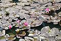 Acharya Jagadish Chandra Bose Indian Botanic Garden - Howrah 2011-01-08 9742.JPG